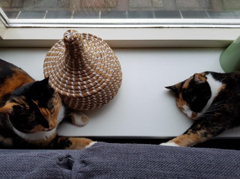 De meisjes en het bontje.