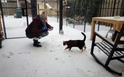 Over lapjes in de sneeuw.